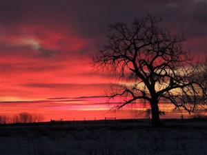 Chinook Sunset